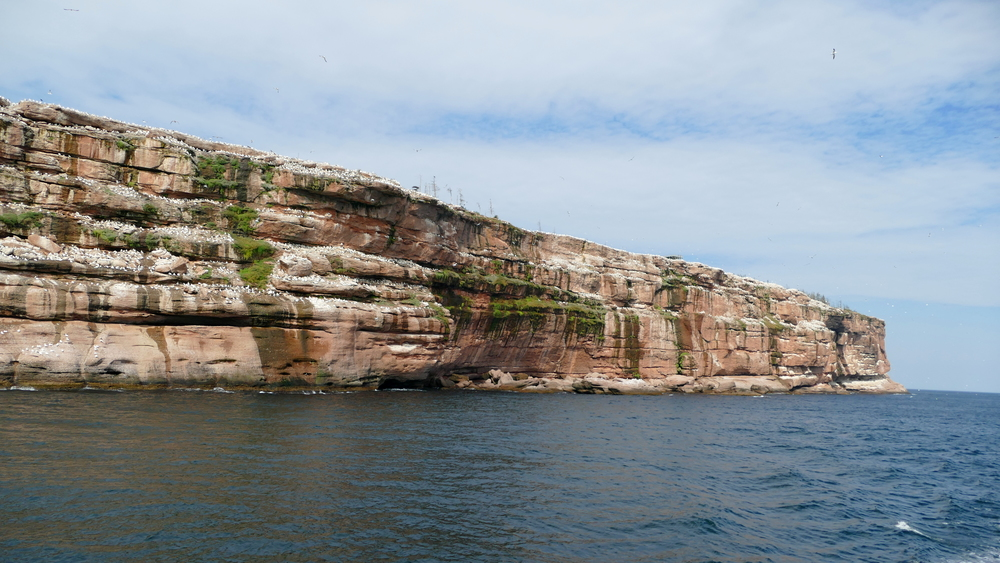 Large red cliff with white specks of birds all over it