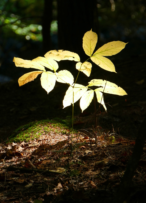A yellow plant glowing with the sun behind it, surrounded by darkness