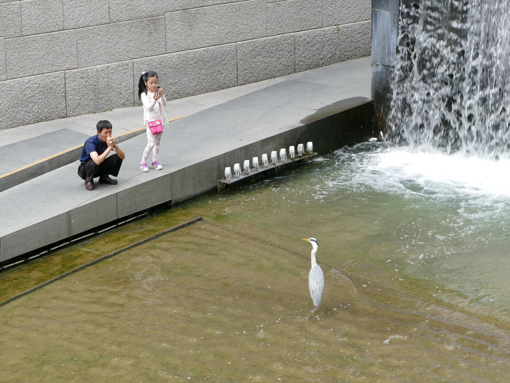 a man and a young child watch a heron in a concrete stream
