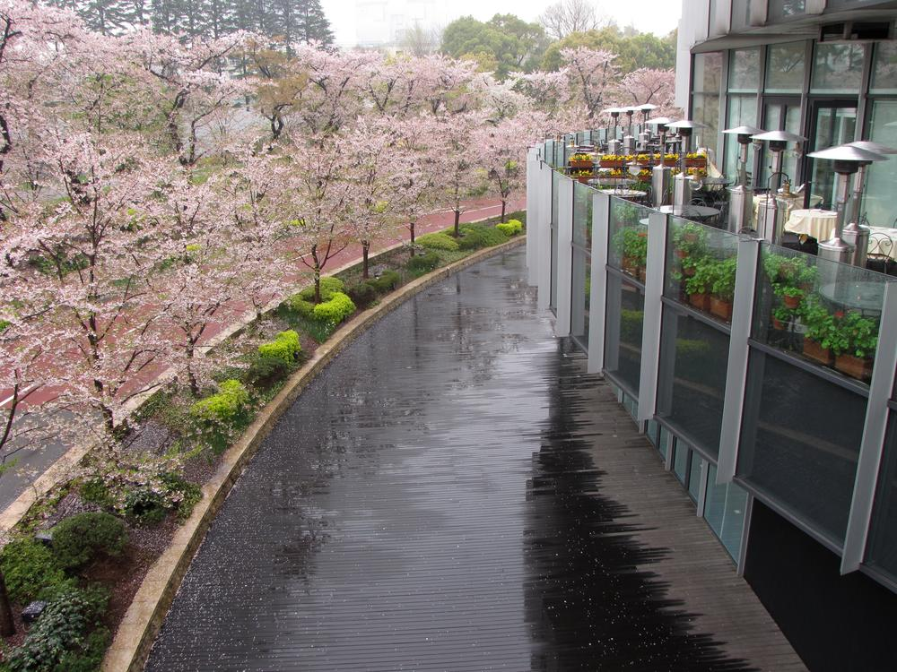 Cherry trees in bloom, rain-slicked pavement, and a restaurant balcony.