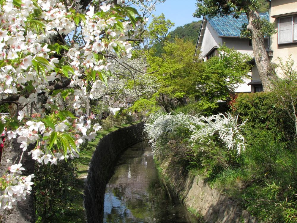 cherry blossoms and other blooms over a small canal
